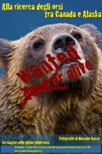 Bear - orso