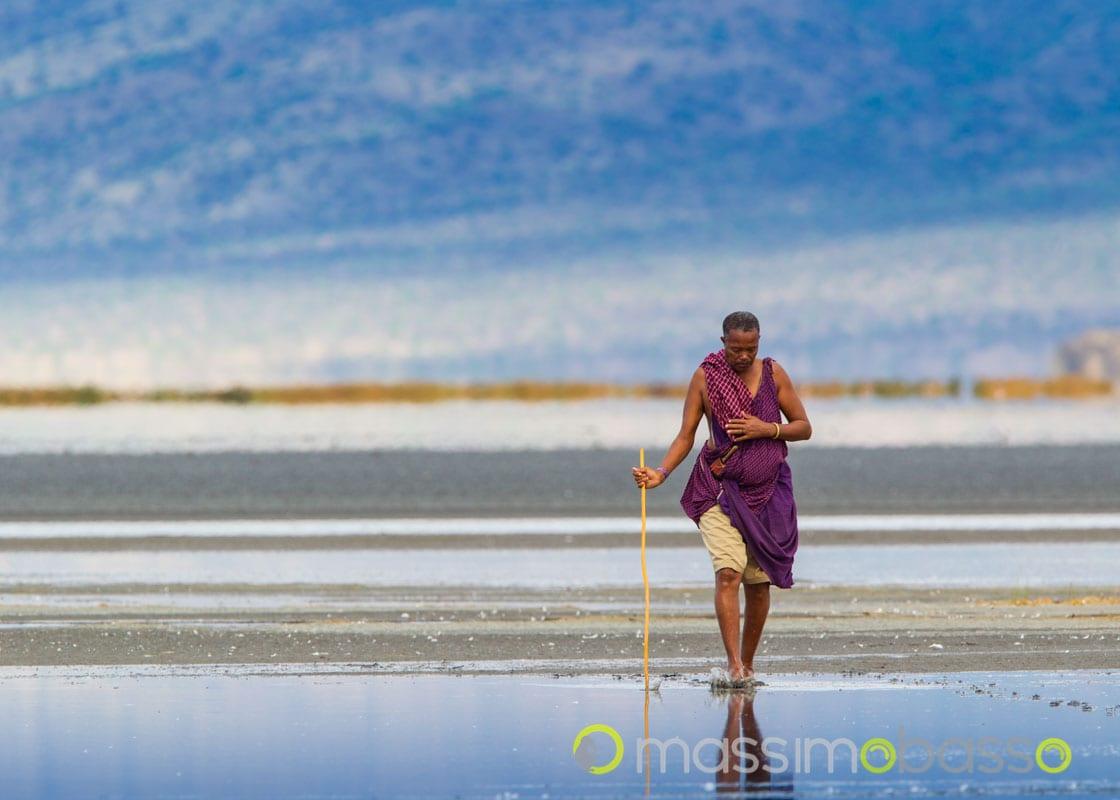 fenicotteri minori a lake natron