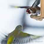 Birdwatching in giardino