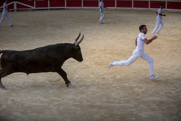Course Camarguase o corrida della Camargue