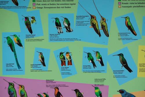 Birdwatching Ecuador papallacta quito guango lodge -1