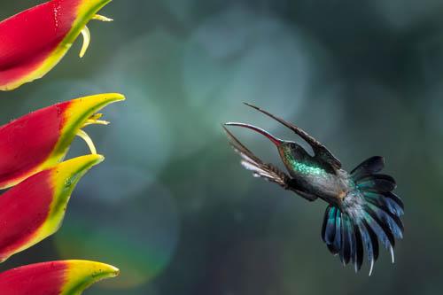 Costa Rica Pura Vida, la natura protagonista