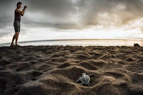 le tartarughe del parco Tortuguero Costa Rica