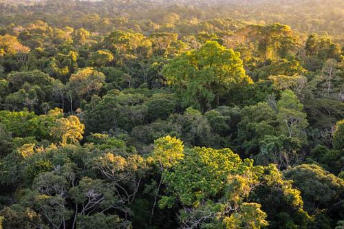 Parco Nazionale Yasuni Amazzonia Ecuador