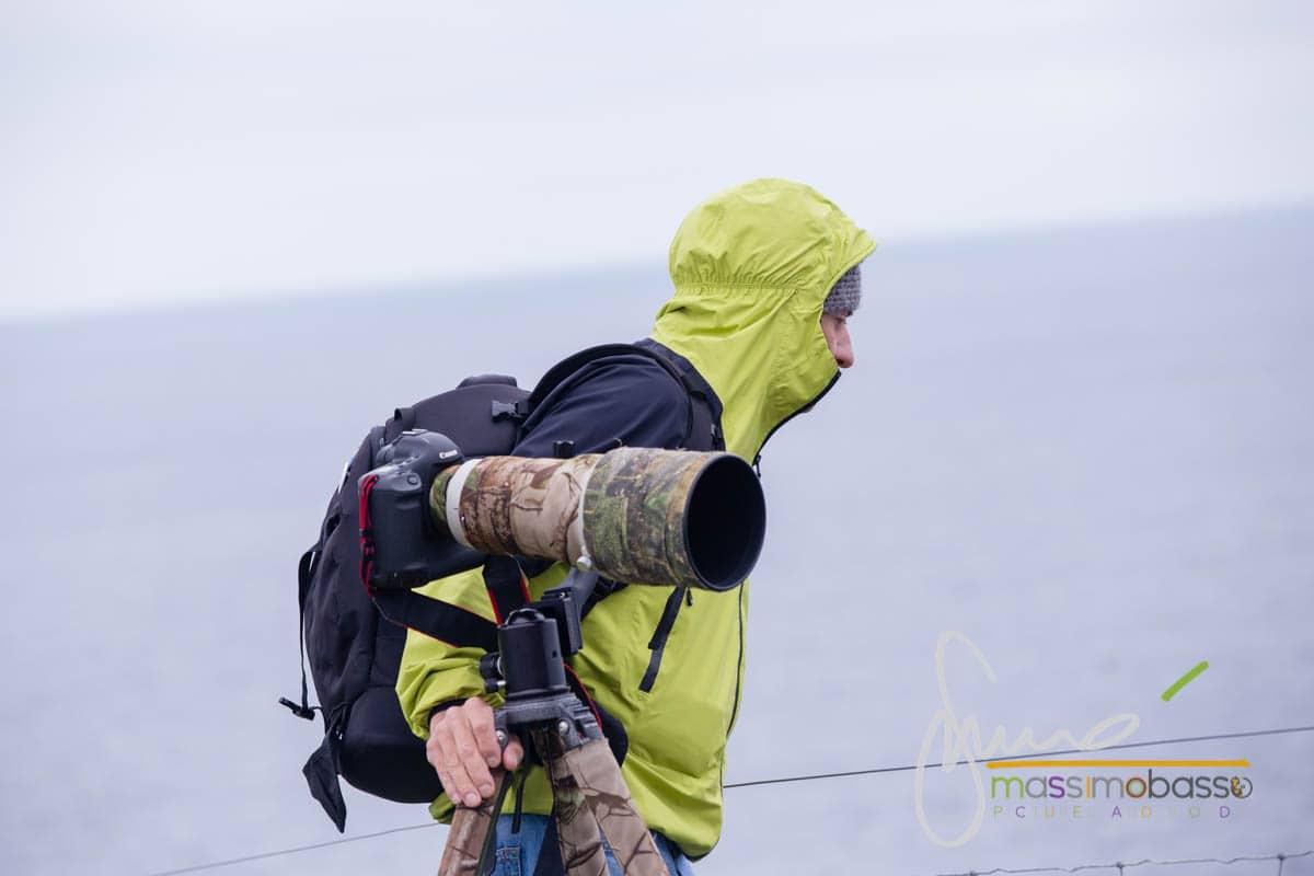 Lontre e pulcinella di mare alle Isole Shetland in giugno