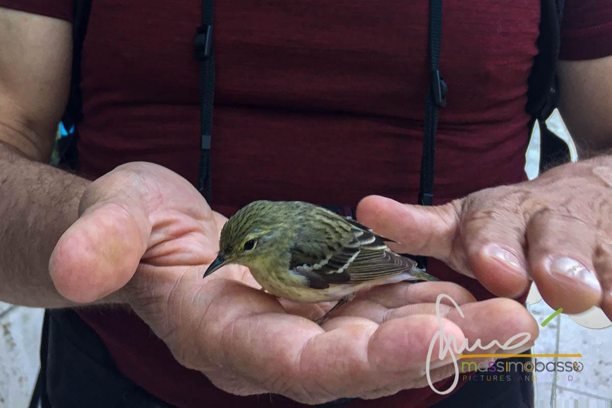 salvare un uccellino a New York