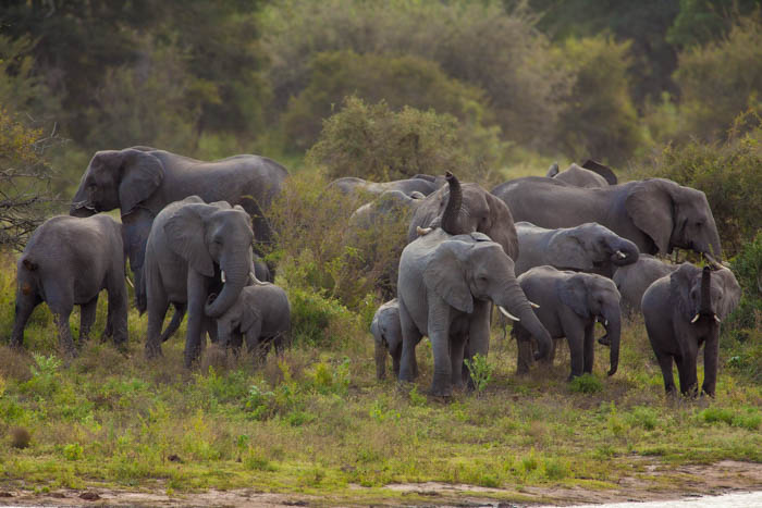 elefanti Parco Nazionale Kruger - Sudafrica